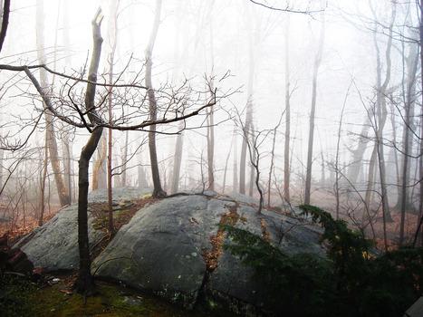 20130224222148-press_larchmont_fog
