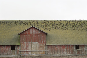 20130301004920-point_reyes_barn
