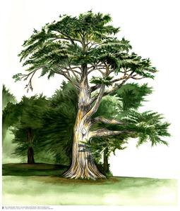 20130301184922-tsd-grandma-tree-low-rez