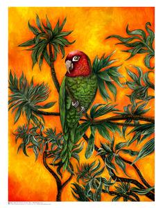 20130301185109-tsd-wild-parrot-of-telegraph-hill