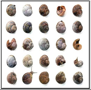 20130305112018-snail14001web