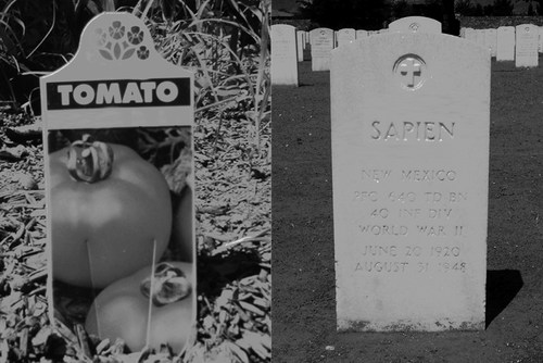 20130310165430-tomatosapiena