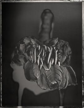 20130321205210-brownpelican-pelecanus-occidentalis2