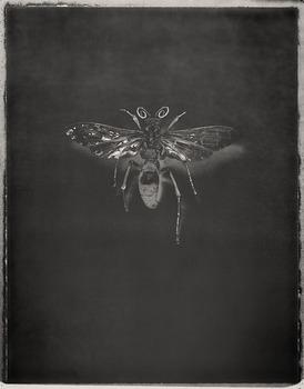 20130321205254-tarantulahawk-pepsis-mildei