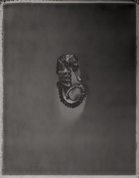 20130321210238-seahorse-unidentified