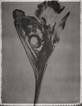 20130321210610-marlin-istiophoridae