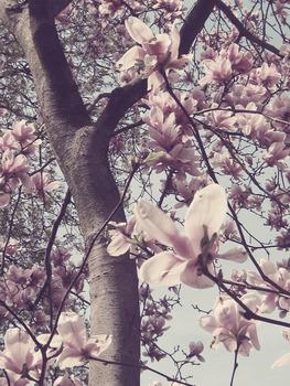 20130326031351-flowertree2vintagepink