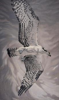 20130326195509-osprey