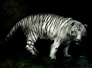 20130402041236-tiger