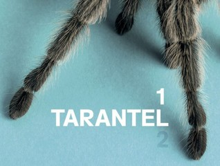 20130406105021-web_tarantel11-460x347