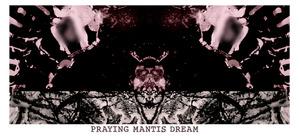 20130403124903-praying-mantis-dream