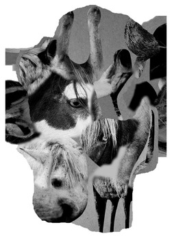 20130403125559-surreal-horse-collage-1