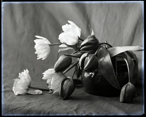 20130411101902-jodie_carey__elegy_2012_-_digital_print_from_glassplate_negative_ca