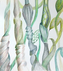 20130411135609-cate_field_coloured_pencil_2