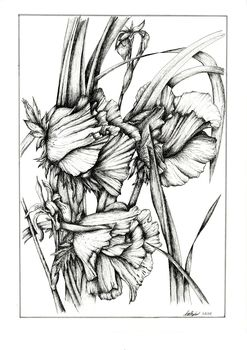20130412095042-j_r_shepherd__poppy_orientale__a3_unframed__roughly_46_x_57cm_framed__pen_and_ink