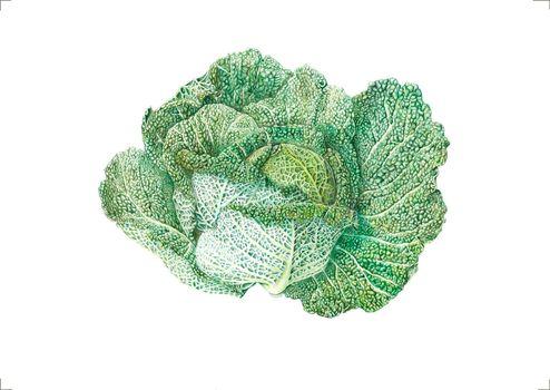 20130412095933-j_r_shepherd__sally_the_savoy__a3_unframed__roughly_57_x_46cm_framed__watercolour