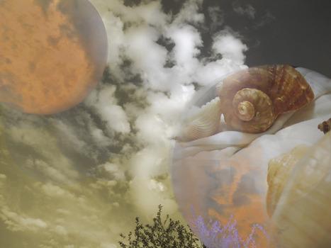 20131108035506-moon_shells