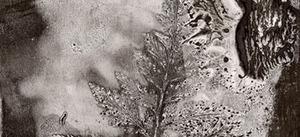 20130415035721-morell_fern-detail
