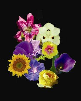 20130430210840-flowercollage_copy