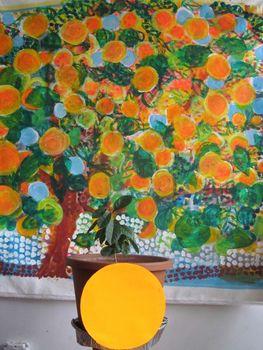 20130503205720-orange_tree_2