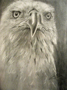 20130507055023-bald_eagle_portrait_by_aoikita-d30zbb1
