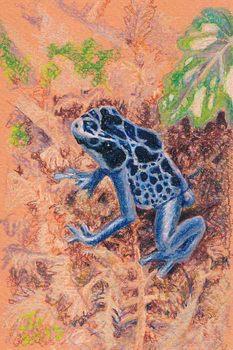 20130510105639-poison_dart_frog