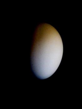 20130513150458-future_egg01