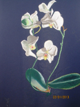 20130514095128-kukkia13_021