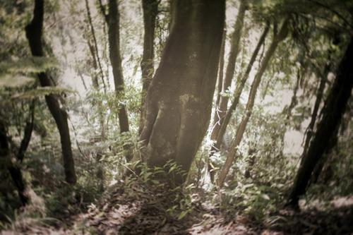 20130518114719-1_foresti