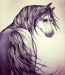 20130522223107-hr_barber_horse