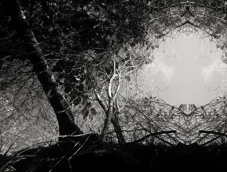 20130523000140-trees-embrace