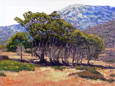 20130628204027-eucalyptus_grove2