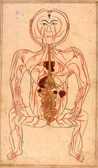 20130525100348-tritton_46_veins_and_arteries_1_im_8042_copy