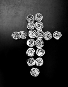 Rose_cross_web_size