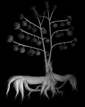 20130526075633-specimen