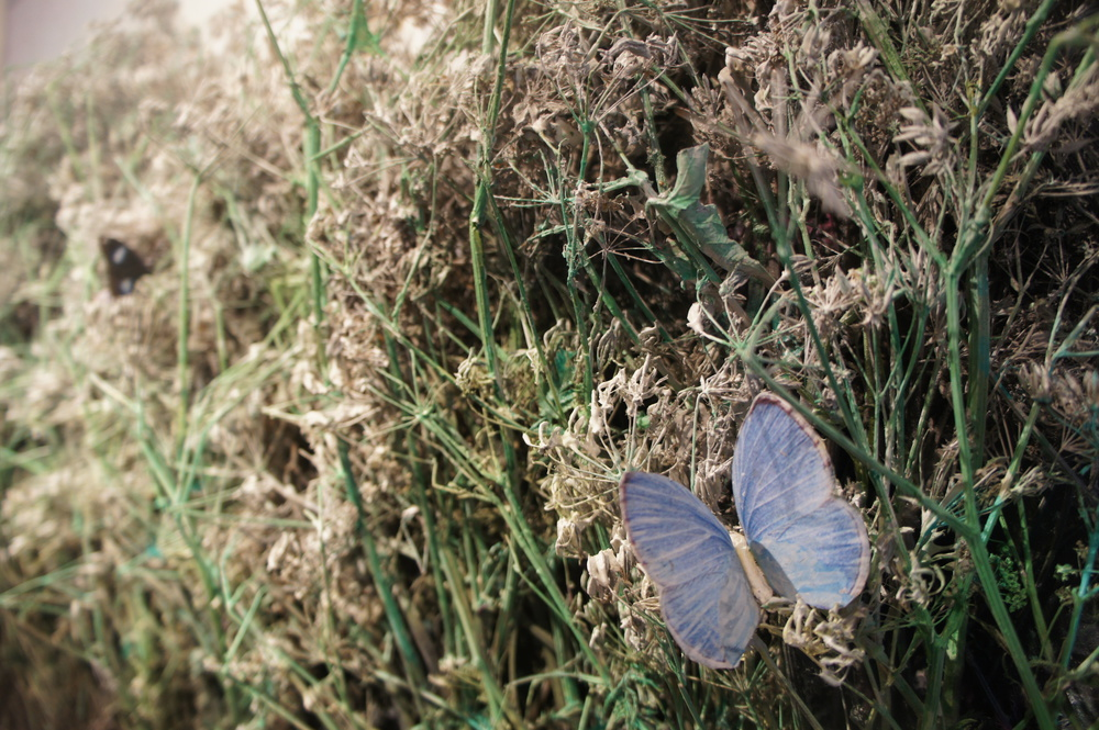 20130601224506-butterflies_picknick_side_view