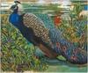20130611064937-heagle_peacock28