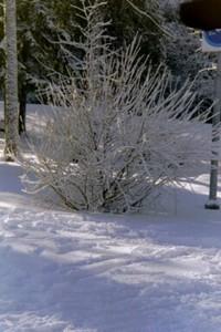 Winter_in_finland_photo_by_igirex
