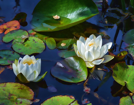 20130615202011-10_spring_pond