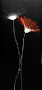 20130615223116-flower3__trry1