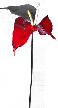 20130615223347-red_flower