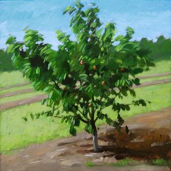 20130620150457-tree-2-new