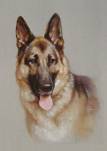 20130620021513-germansheperd
