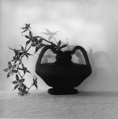 20130620225326-mapplethorpe_orchids_80