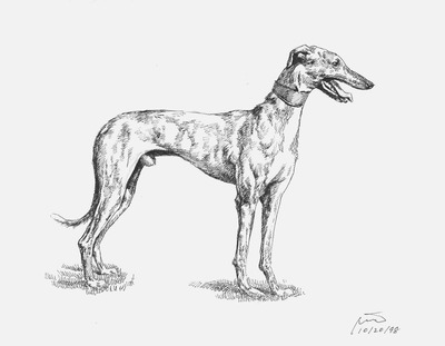 20130621014547-dog1