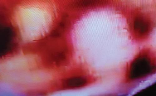 20130621091336-bloodline_6-02