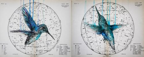20130624123441-heavenly_bodies_-_hummingbird_diptych_ink_pencil_on_1880_celestial_maps19x24cm_x2_03-2013