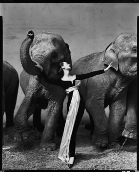 20130625220029-avedon_dovimawithelephants