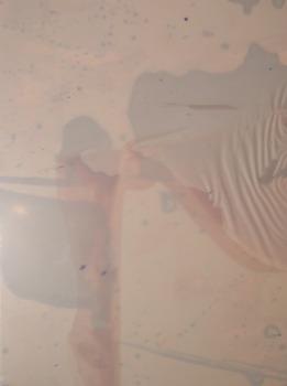20130718191359-pink_ripple