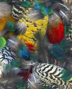 20130718202651-phasianidaegalliform